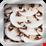 Champignions crus